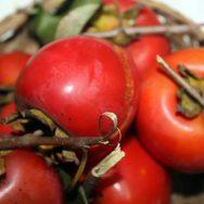 Cây hồng đỏ